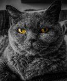 Cuanto viven los gatos