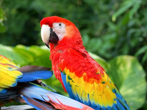 Loro tropical multicolor