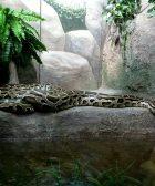 El terrario de la serpiente cuidados