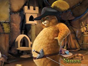Gato Shrek mirada