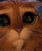 Gato shrek ojos triste